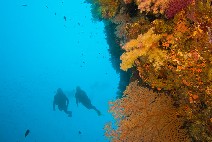 Deep Diver
