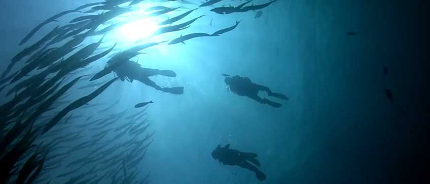Divers and fish