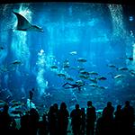 Aquarium divers