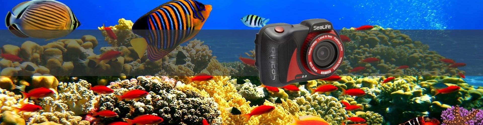 Sealife Camera Demo